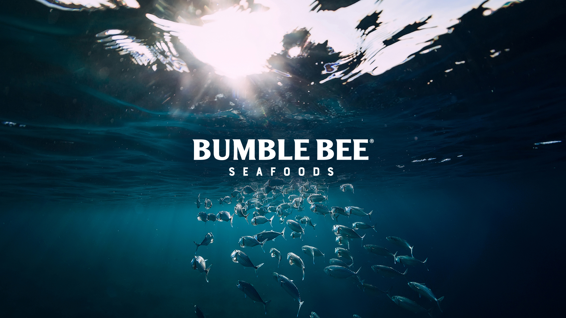 Welcome to The Many, Bumble Bee, What a Catch! | The Many